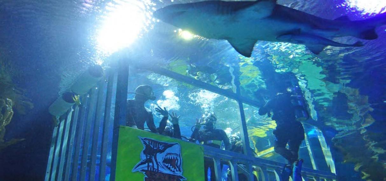 Aquaria KLCC Buy Ticket Online - Best Deal