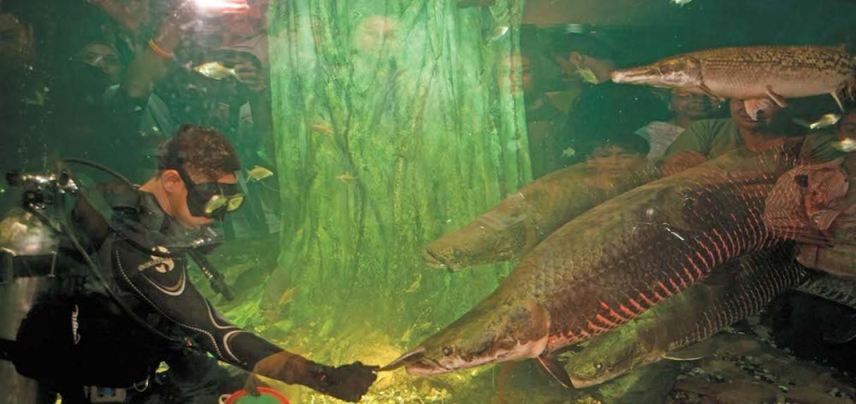 aquaria-klcc-02