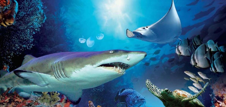 aquaria-klcc-06