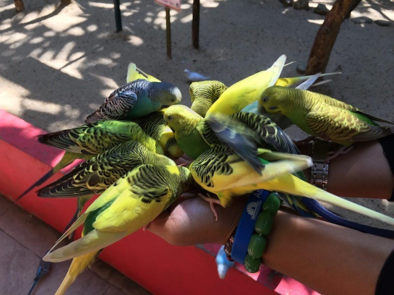 bird-langkawi-wildlife-park