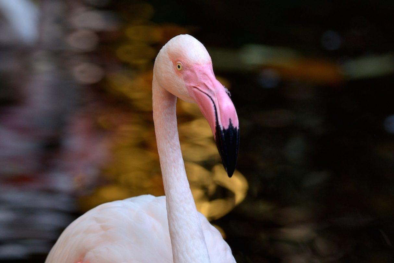 flamingo-langkawi-wildlife-park