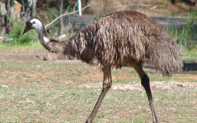 p9-langkawi-wildlife-park