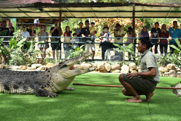 Bujang Lang Giant Croc Show 4 main